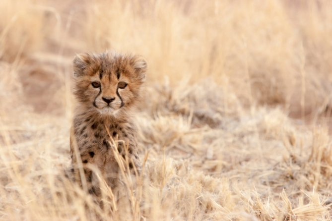 Namibia - Reisen - Tierwelt
