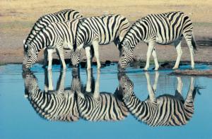 Safari - Namibia - Reisen - Etosha