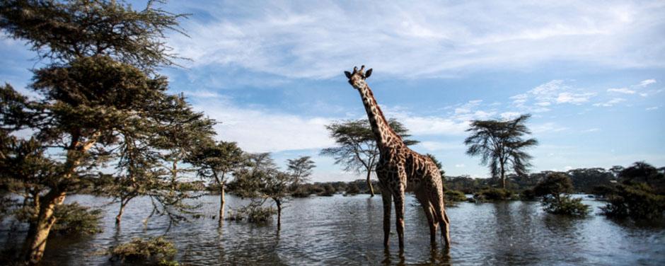 Safari - Kenia - Reisen