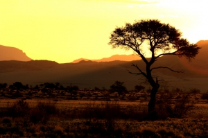 Namibia Safaris: Landschaft
