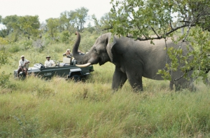 Südafrika Safari - Elefanten im Jeep beobachten