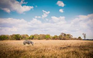 Visum Malawi