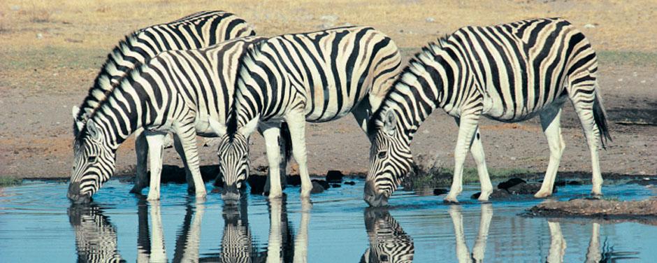 Safari - Namibia- Reisen