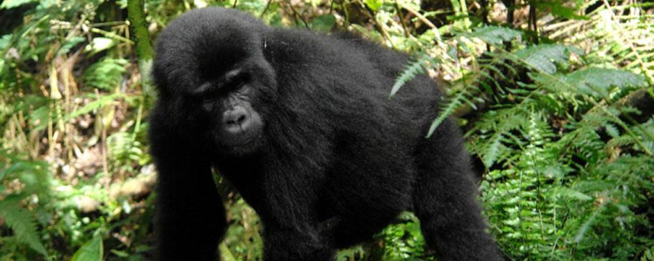 Uganda - Trekking Reisen