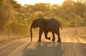 Südafrika - Elefant - Natureservat