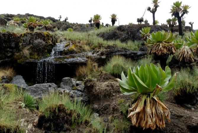 Mt. Kenya Reise