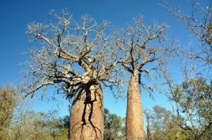 Madagaskar Reisen mit touring-afrika.de