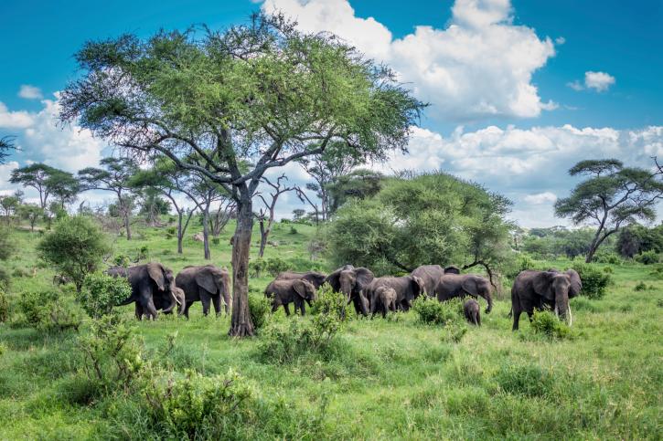 Tarngire-Nationalpark-Tansania mit touring-afrika.de Gruppenreisen
