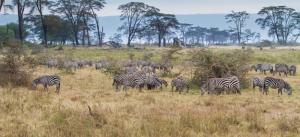 Kenia Safari kombiniert mit Badeurlaub-touring-afrika.de