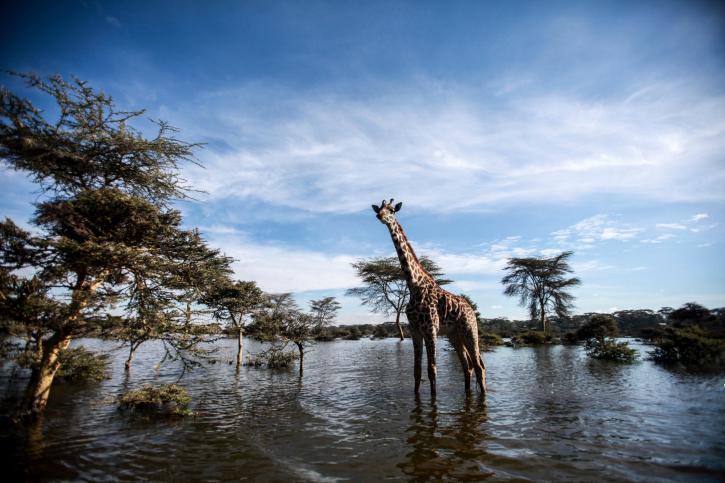 Reisebericht Kenia-Lake naivasha-mit touring-afrika.de