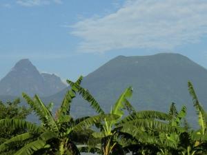Volcanoes Nationalpark-Ruanda mit touring-afrika.de- Ruanda Reisen