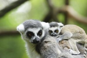 Besuch des Tsingy de Bemaraha Nationalpark-Madagaskar mit touring-afrika.de