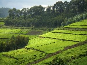 Ruanda Ruanda Reise zum Nyungwe Forest Nationalpark