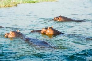 Queen-Elizabeth-Nationalpark Uganda- Uganda Reisen