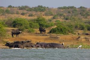 Uganda Gruppenreisen- Queen-Elizabeth-Nationalpark