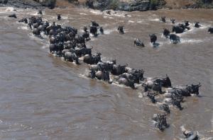 Masai Mara River mit Touring-afrika.de-Reisebericht Kenia