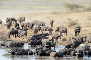 Touring-afrika.de/reisebericht Tansania