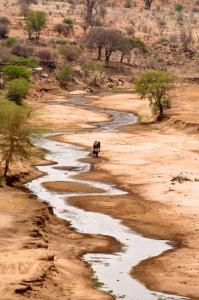 Serengeti Nationalpark-Reisebericht Tansanai