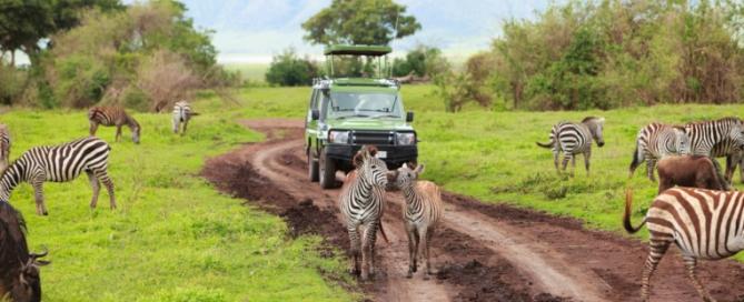 Tansania-Safari mit Touring-Afrika.de Reisebericht