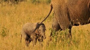 Unser Reisebericht Tansania