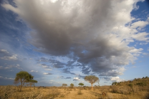 Mit touring-afrika.de-Kenia Reisen zum Tsavo Ost NMationalpark