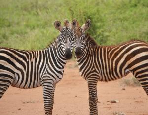 Tsavo Ost Nationalpark-Kenia Individualreisen mit touring-afrika.de