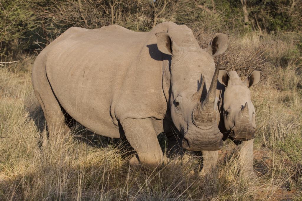 Kenia Reisen und Safarim mit touring-afrika.de