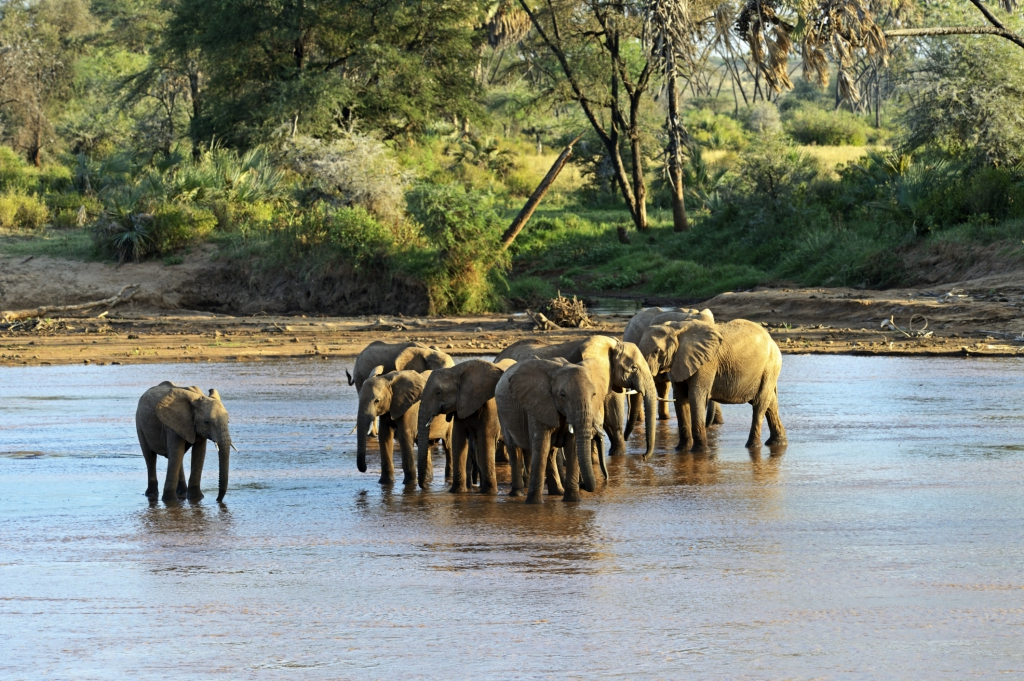Kenia Reisen mit Touring-afrika.de- auf Big Five Kenia safari
