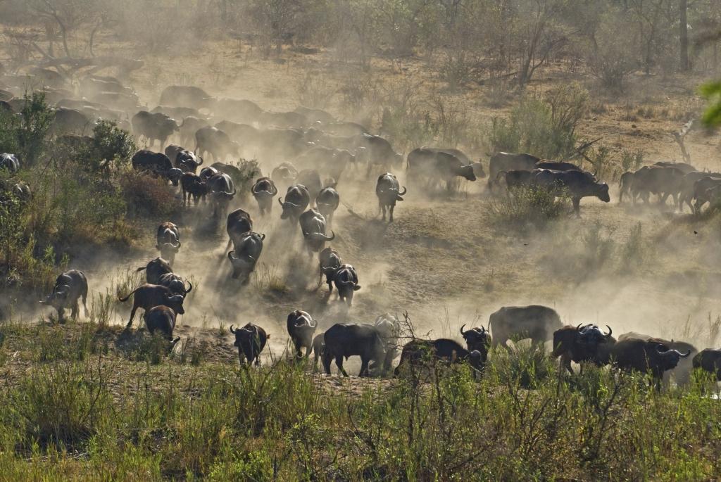Im Krüger Nationalpark-Südafriika Gruppenreise mit touring-afrika.de