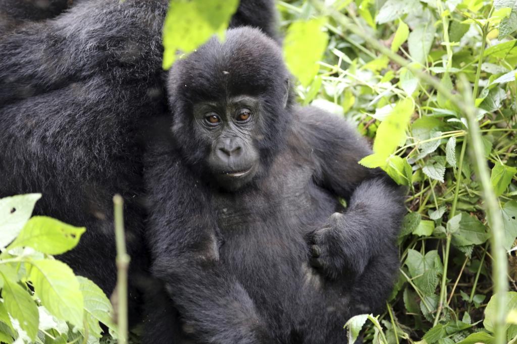 mit Touring-Afrika Kleingruppenreise Uganda