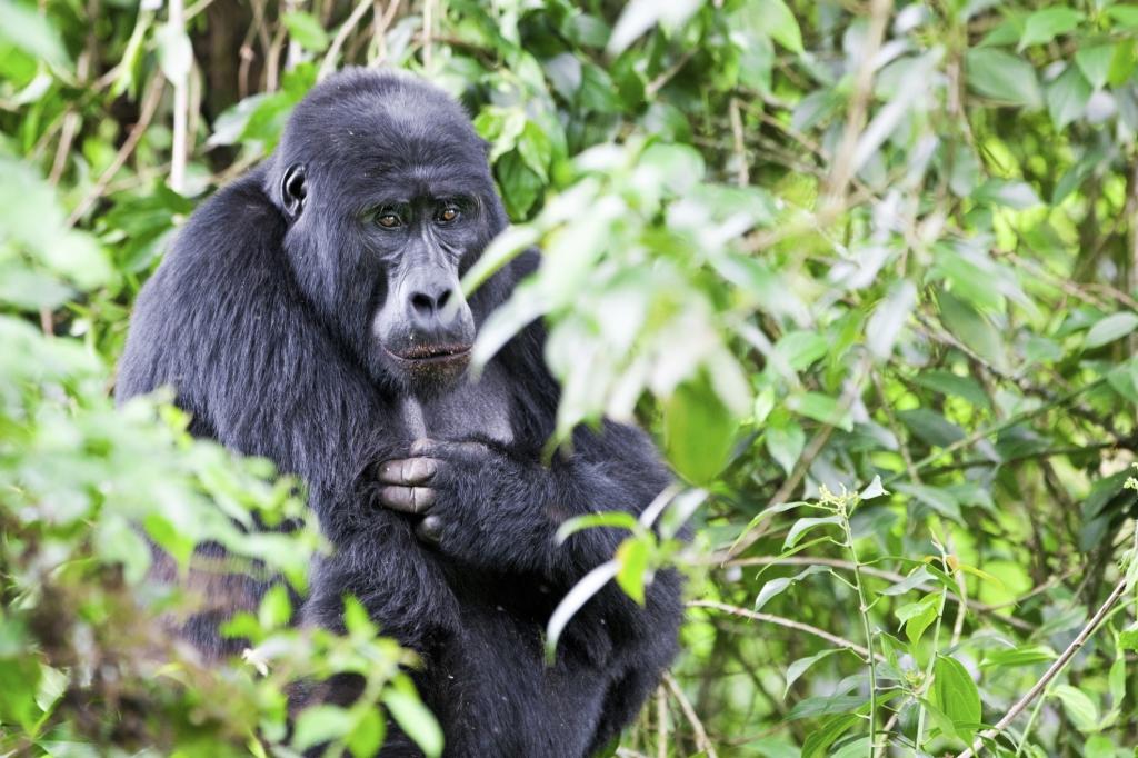 Uganda Reisebericht
