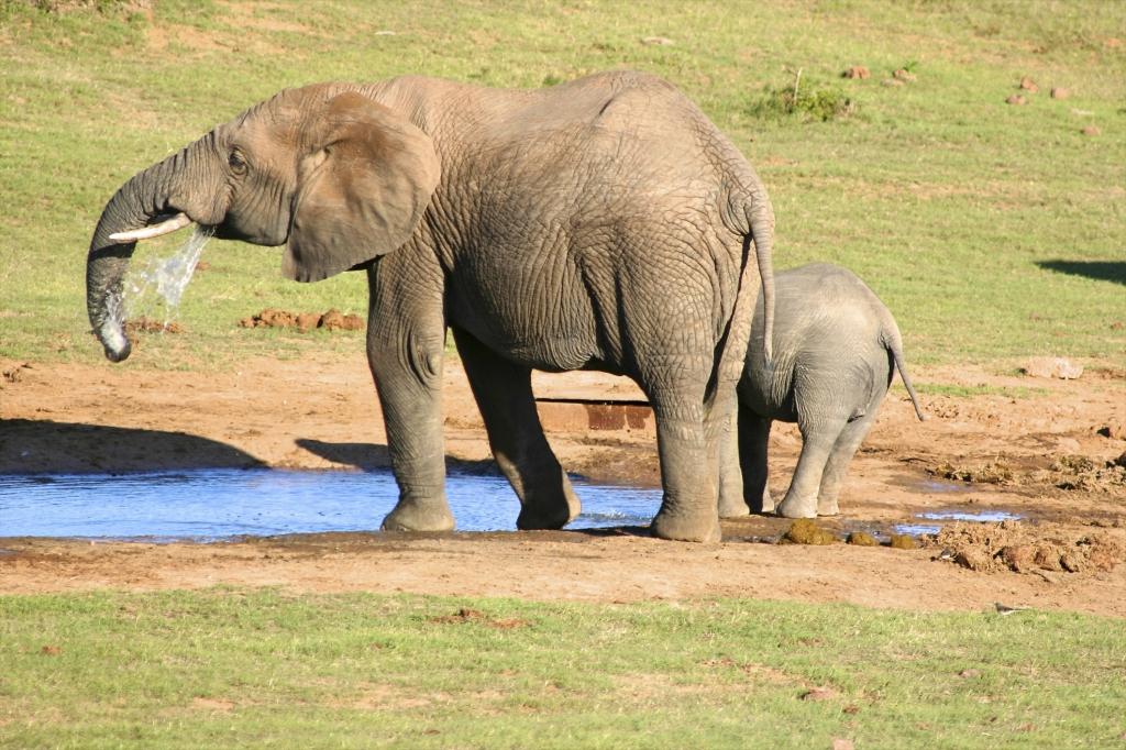 Reisebericht Tansania-Tansania Safari und Sansibar