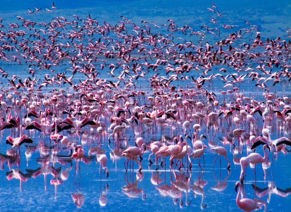 Flamingos am Lake Manyara- Camping Safari Tansania- Tansania Gruppenreise