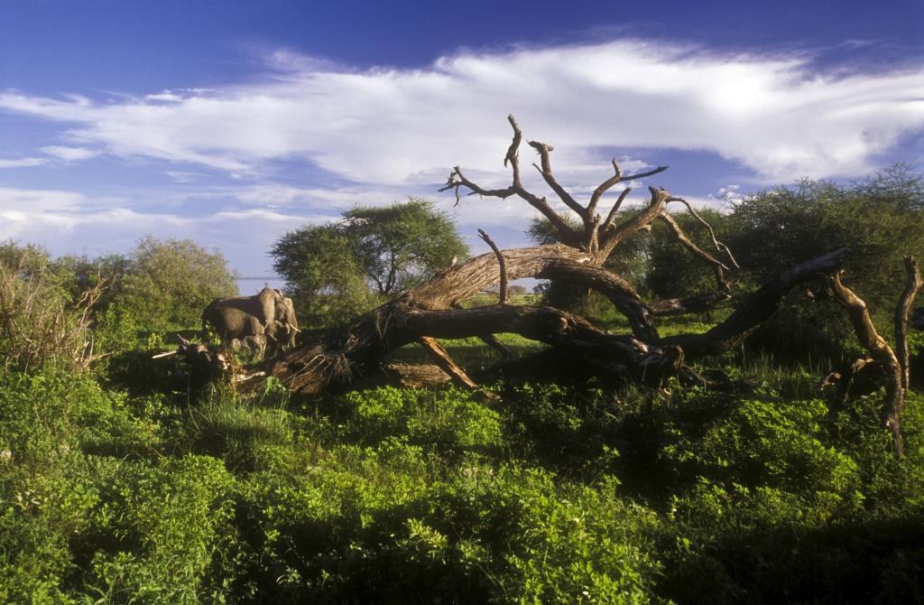 mit touring-afrika- Afrika Reisen