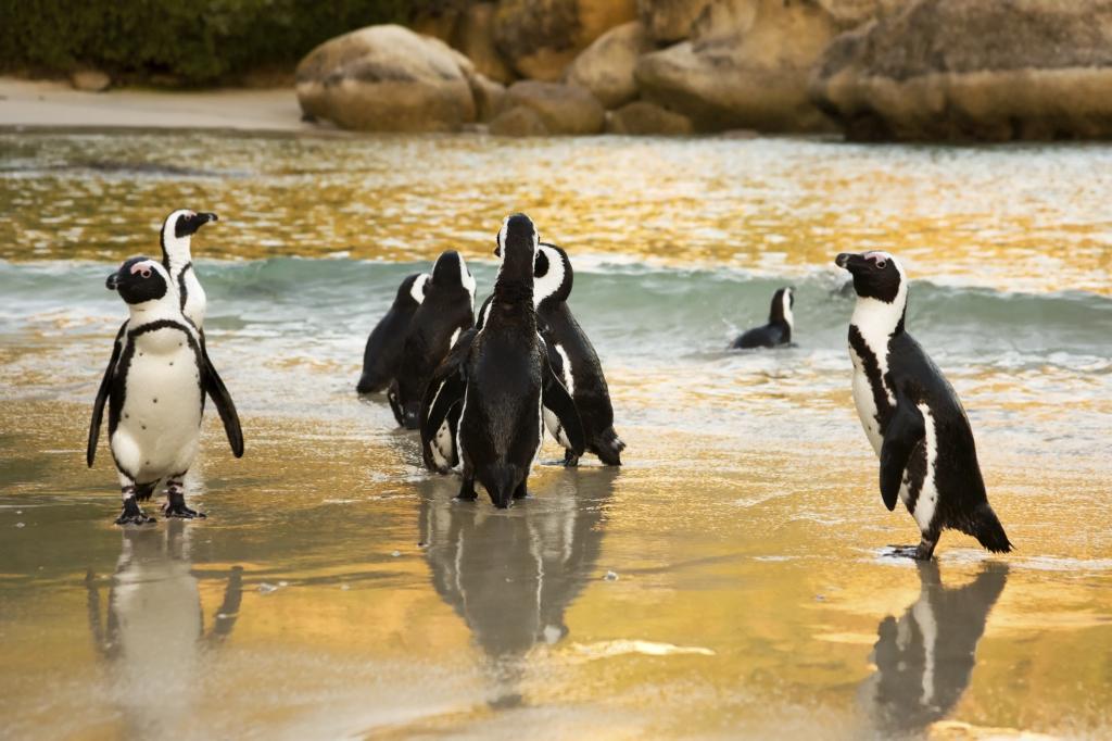 Gruppen-Rundreise Südafrika mit Touring-Afrika