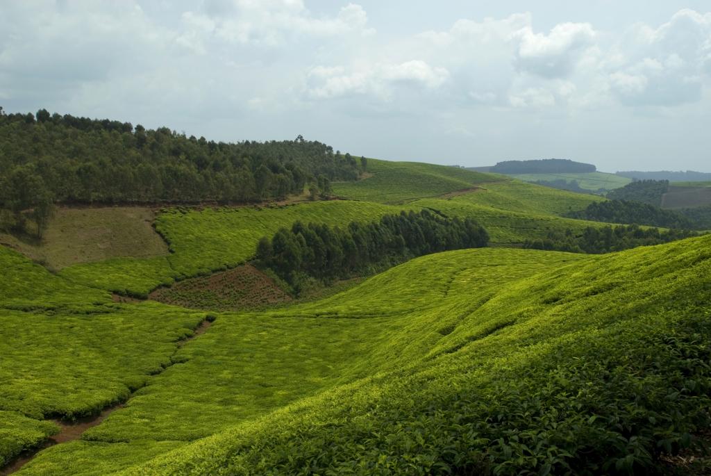 Reisebericht Uganda- Ruanda mit Touring Afrika auf Rundreise