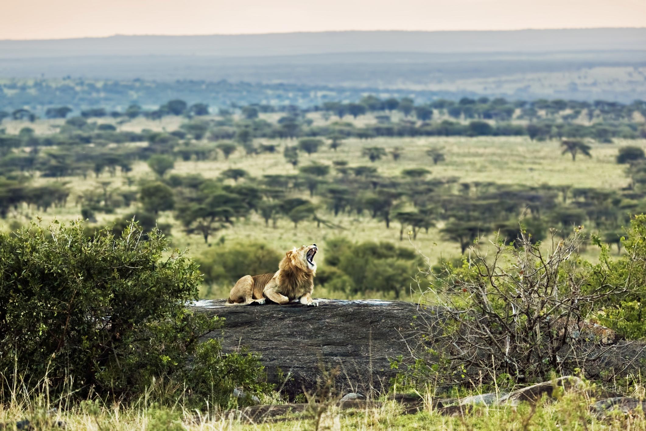 Serengeti-4Tage Camping Safari Tansania mit Tansania Reisen-touring-afrika.de