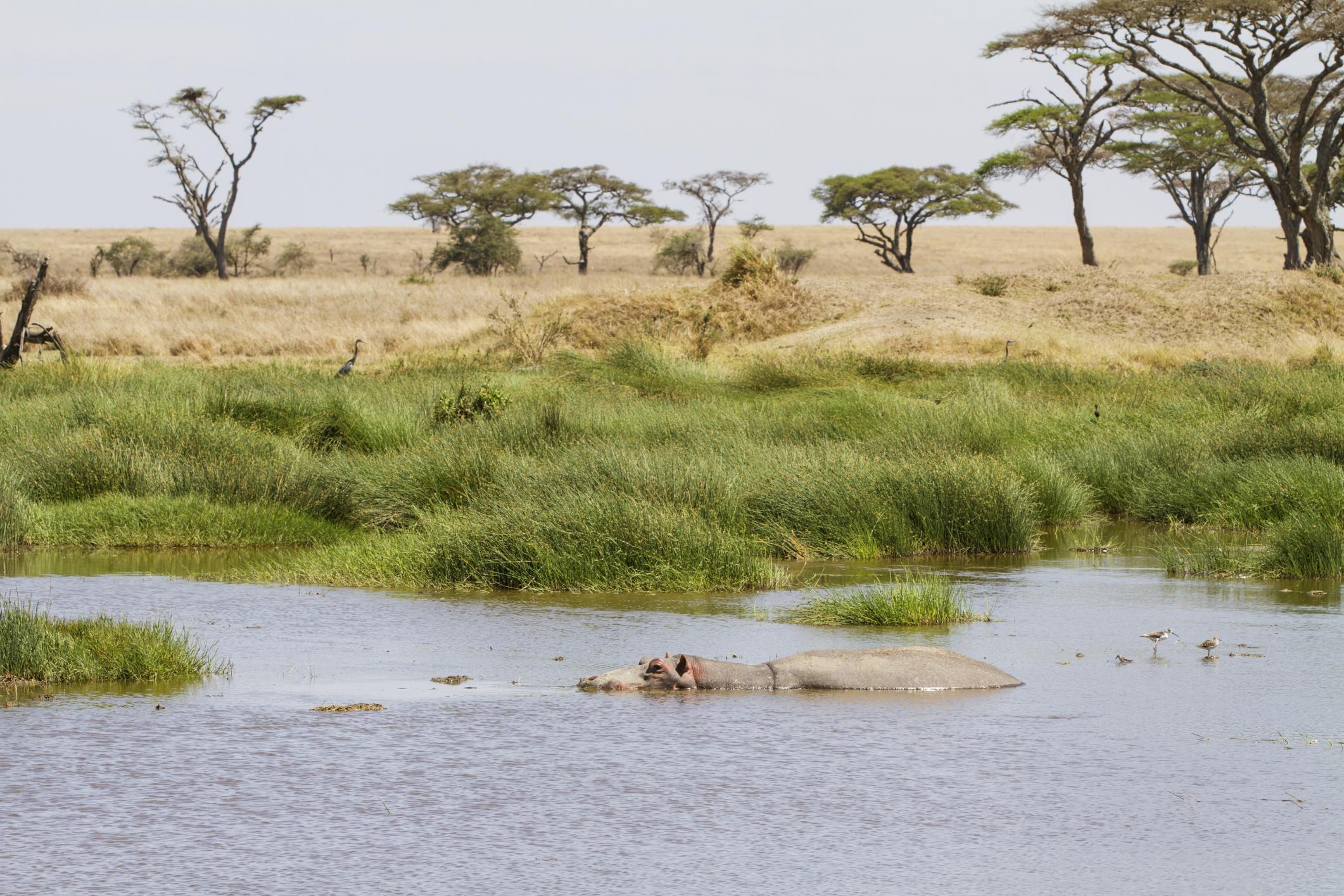 Reisebericht Tansania - Safari durch Tansania