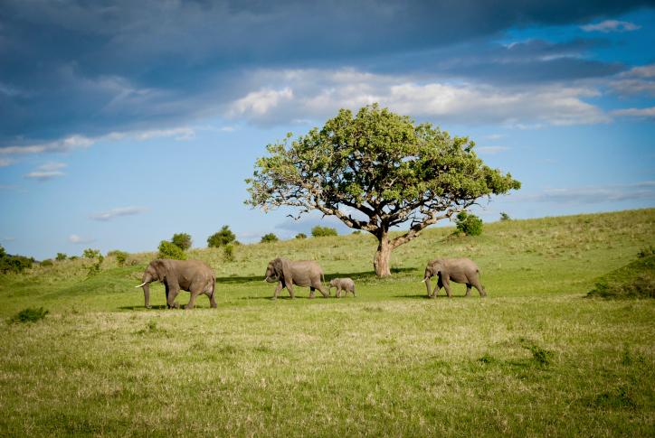 Elefanten - Ostafrika Safari