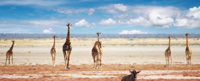Giraffen, nachhaltige Namibia Reisen