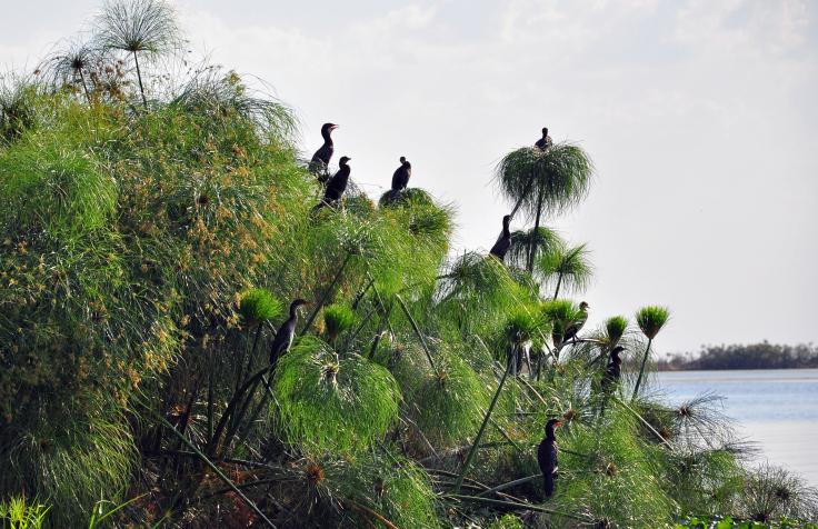 Kafue Nationalpark, Sambia
