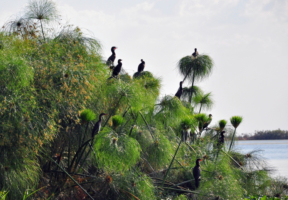 Highlight einer Sambia-Reise: der Kafue-Nationalpark