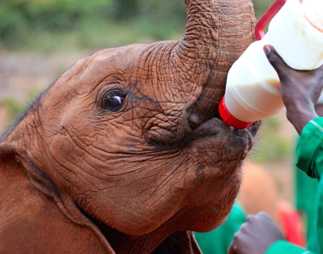 Elefantenbaby - Kenia Elefantenwaisenhaus besichtigen