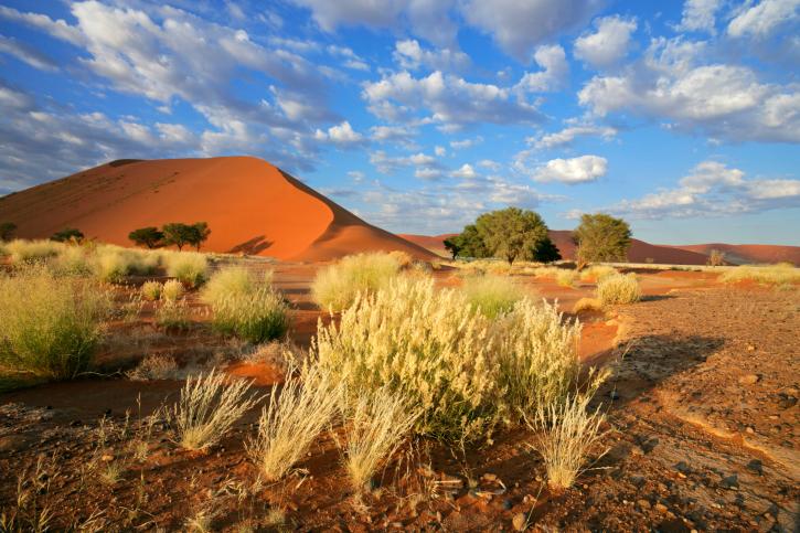 Typische Szenerie auf Namibia-Reise