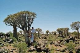 Namibia - Reisen - Köcherbaum
