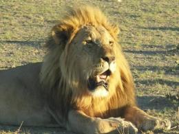 Namibia Reisebericht - Etosha Nationalpark