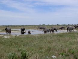 Namibia - Reise - Safari