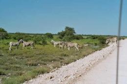 Namibia - Safari - Reise