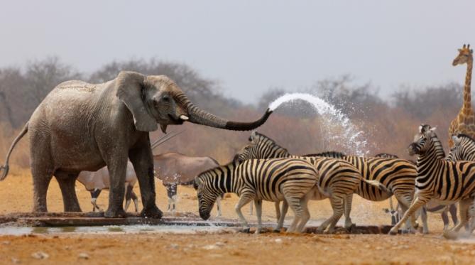 Namibia - Reise - Etosha-Park