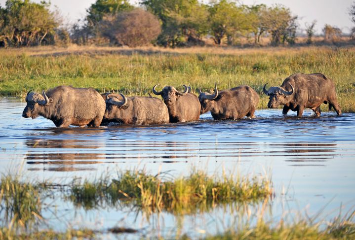 Viel Wasser gibt's auf Botswana-Reise zu sehen